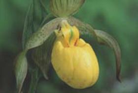 Bruce Peninsula Orchid Festival
